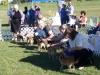 Best-Puppy-in-Show-line